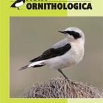 "Nou article: ""Suitability of poplar plantations for a cavity-nesting specialist, the Lesser Spotted Woodpecker Dendrocopos minor, in the Mediterranean mosaic landscape"""